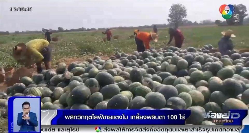 แม่ค้าแตงโมเจอวิกฤตโควิด-19 ไลฟ์สดขายขอแค่ค่าปุ๋ย คนไทยแห่อุดหนุนเกลี้ยง 100 ไร่