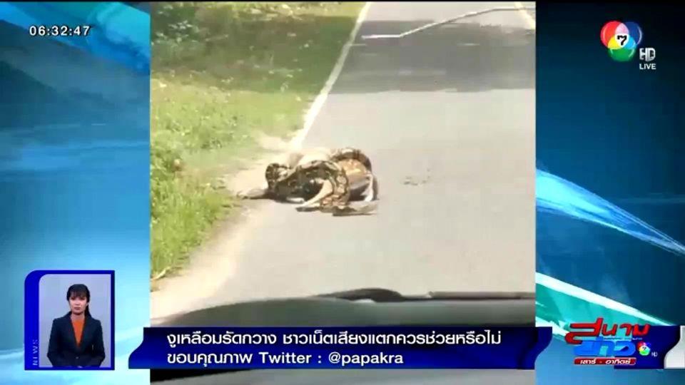 เผยภาพ งูเหลือมรัดเหยื่ออยู่กลางถนน ชาวเน็ตเสียงแตกควรช่วยหรือไม่