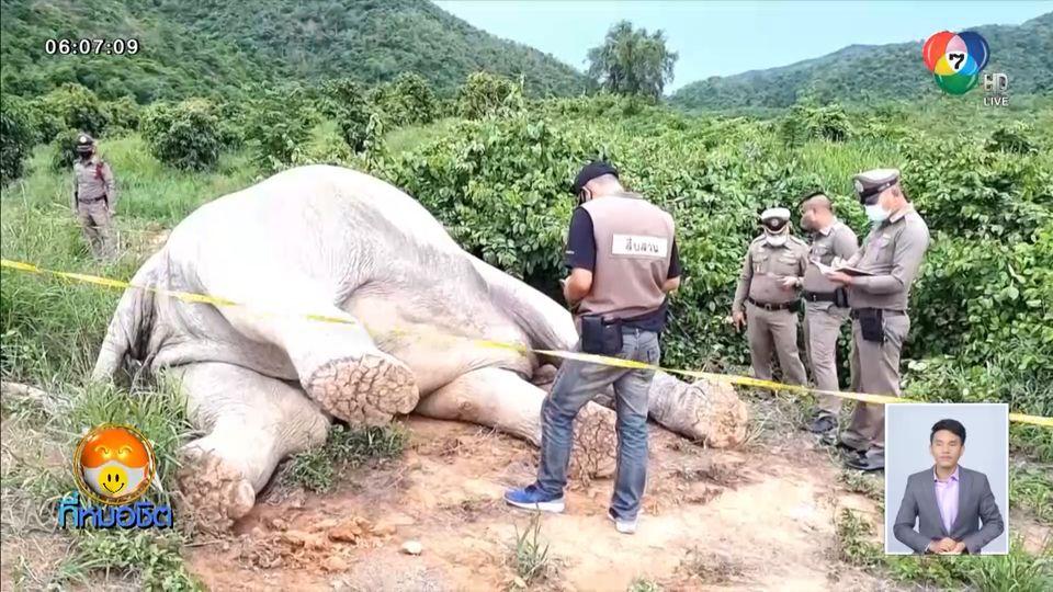 สลด ช้างป่ากุยบุรีถูกไฟฟ้าช็อตตายในสวนมะม่วงของชาวบ้าน