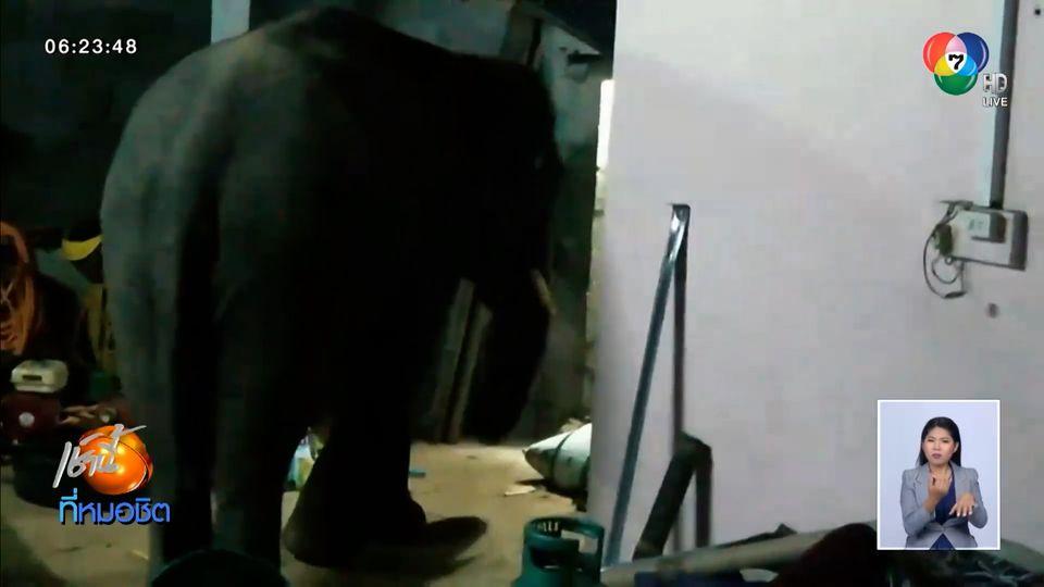 ช้างป่าบุกบ้าน จ.ระยอง หาของกินกลางดึก