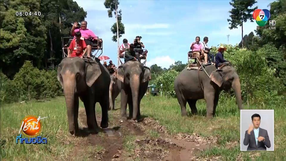 ชวนเที่ยวธรรมชาติ นั่งหลังช้าง - เล่นน้ำกับช้าง ในลำธารเกาะช้าง จ.ตราด