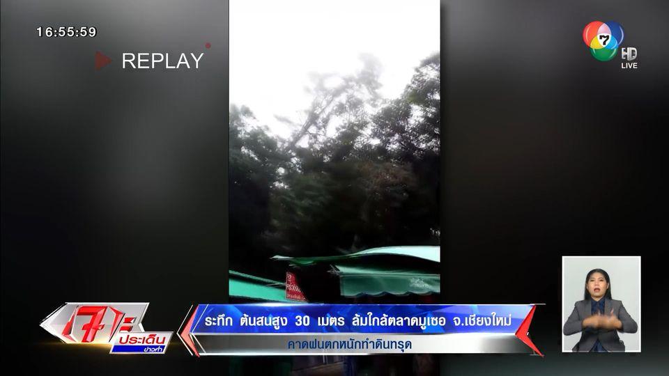 ระทึก ต้นสนสูง 30 เมตร ล้มใกล้ตลาดมูเซอ จ.เชียงใหม่ คาดฝนตกหนักทำดินทรุด