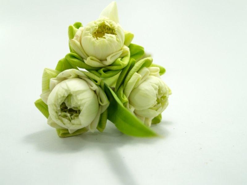 ดอกไม้บูชาพระ และความหมายของดอกไม้บูชาพระ