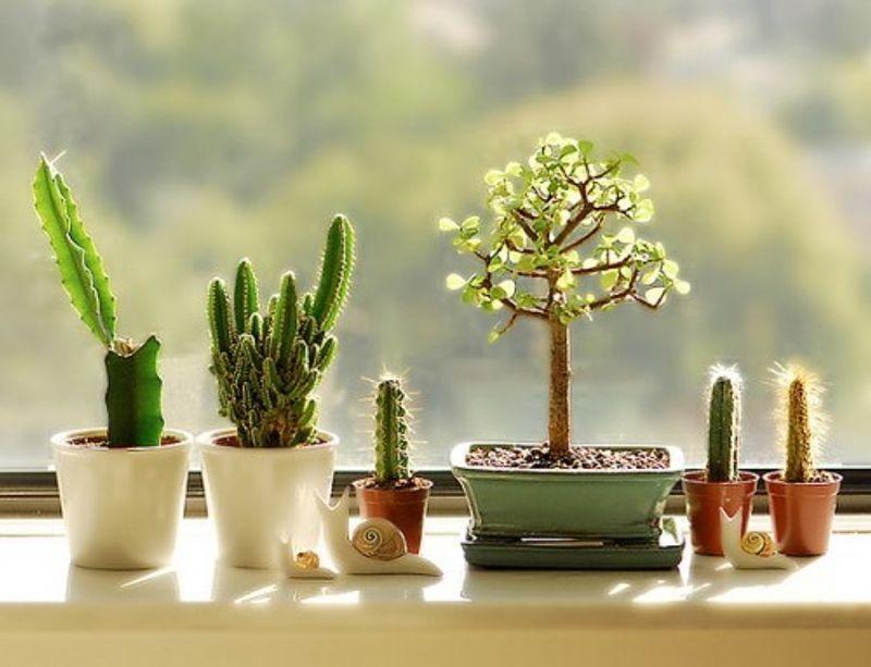 ต้นไม้มงคลประดับโต๊ะทำงานเสริมฮวงจุ้ย