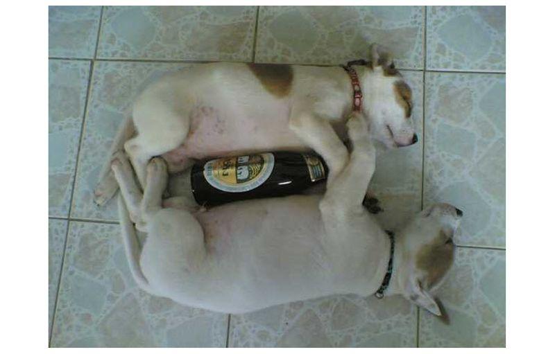 ทายใจทายนิสัย อาการเมา