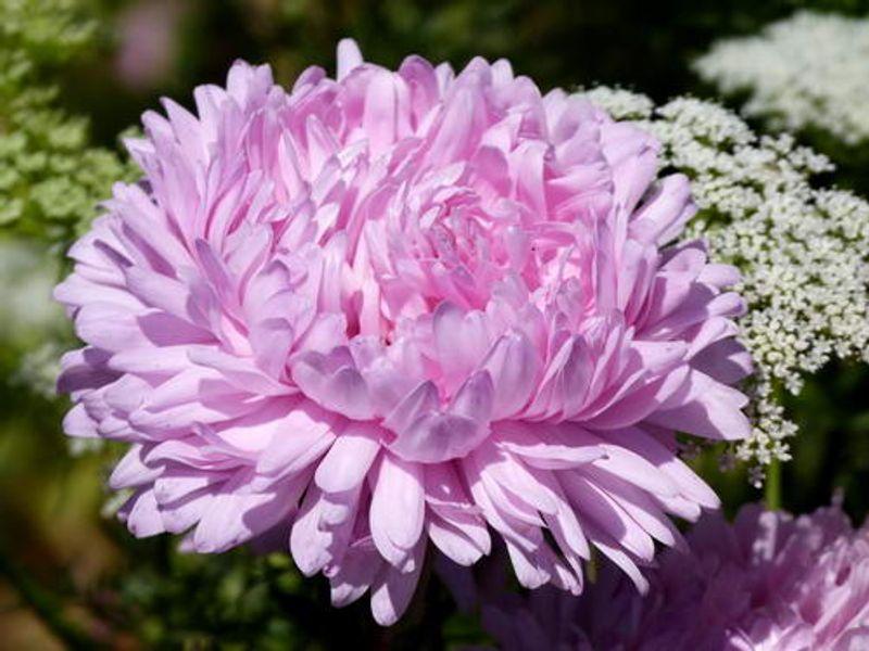 ดอกไม้มงคล ที่ต้องปลูกในบ้าน ประจำเดือนเกิด 12 เดือน