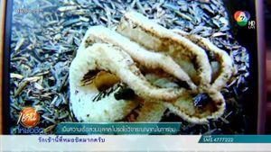 พบ เห็ดปลาหมึก พืชหายากอันดับ 2 ของโลกขึ้นในกระถางกุหลาบ