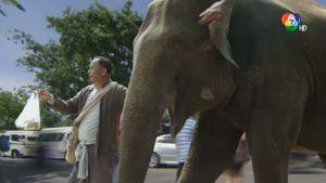ภาพยนตร์เชิงสารคดีชุดช้างไทย : ตอน 8 กลับบ้าน คลิป 2/4