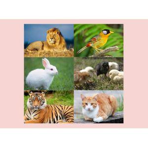 ทายใจทายนิสัย กับการเลือกสัตว์
