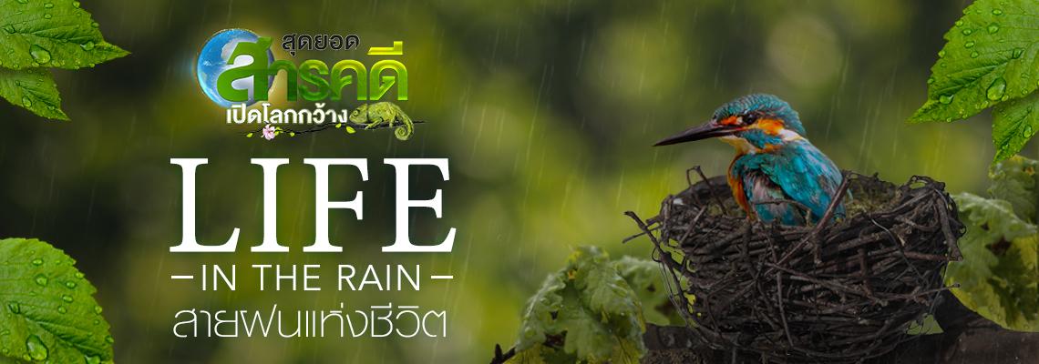 สุดยอดสารคดีเปิดโลกกว้าง LIFE IN THE RAIN สายฝนแห่งชีวิต